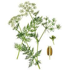 herbe cuisine 15 sortes de graines d herbes herbe alimentaire une grande cuisine