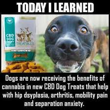 Dog At Vet Meme - will cannabinoid oil benefit your pet vet harmony