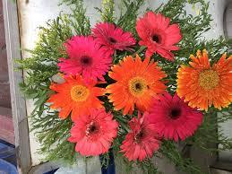 flowers store hari om flowers store photos silvassa pictures images