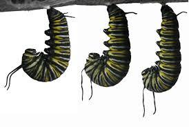 about monarchs monarchchaser u0027s blog