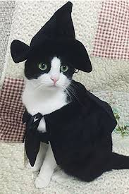 30 pet cat halloween costumes 2017 cute ideas for cat costumes