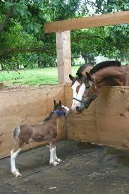 Wildfire Yoga Lexington Ky by 3465 Best Horses U0026 Their Close Cousins Images On Pinterest