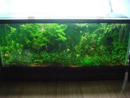 How To Aquascape A Planted Tank 144 Best Aquascaping And Planted Tanks Images On Pinterest