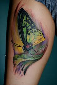 colored butterfly leg