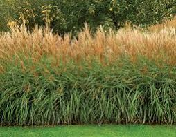 catchy collections of ornamental grass garden design