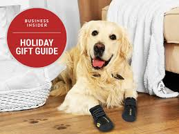 the best christmas gifts for dogs business insider