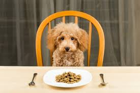 10 easily digestible foods for dogs insider monkey