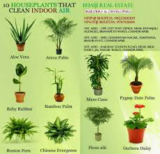 bhaiji real estate 10 houseplants that clean indoor air