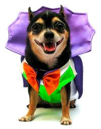 Dogs Halloween Costumes Pictures Dracula Dog Costume Dracula Vampire Dog Halloween Costumes