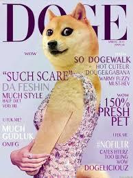 So Doge Meme - 31 best very doge such meme images on pinterest funny stuff