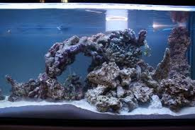 Floating Aquascape Reef2reef Saltwater And Reef Aquarium Forum - image result for aquascaping 90 gallon reef tank aquascaping