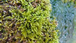 how to grow moss in a terrarium garden guides