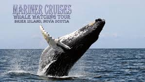 brier island whale watching tour mariner cruises youtube