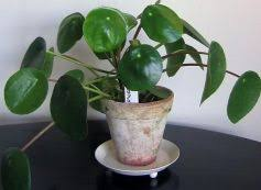 small indoor plants to decorate house photos images pics stills