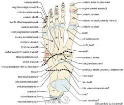 Foot Anatomy Nerves Anatomy Of The Left Foot Nerves Of The Foot And Ankle Diagram