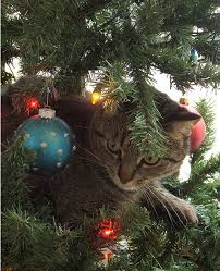 391 best cats u0027n christmas trees images on pinterest cats