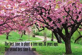 on sale motivational quote the best time to plant a tree was