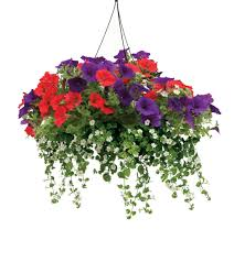 Plants That Need Low Light Snowstorm Giant Snowflake Bacopa Sutera Cordata Proven Winners