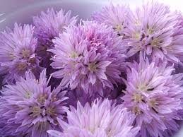lavender martini chive blossoms in booze or vinegar boozed infused