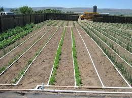 Garden Irrigation Garden Sprinkler System Design Designing A Basic