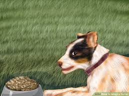 adopt a australian shepherd how to adopt a terrier 10 steps with pictures wikihow