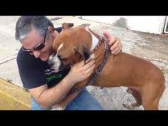 boxer dog youtube 11 dangerously alarming facts about boxers my favorite breed of