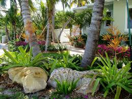 images florida landscaping bromeliads fresh air forum