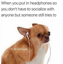 Meme Chihuahua - 19 chihuahua memes that are weirdly relatable