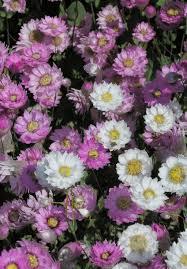 fertiliser for native plants the list our top 6 bush pinks