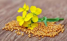ground mustard from the spice cupboard mustard seeds and ground mustard kitchn