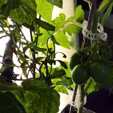 winter gardening in nj is it possible u2022 helpfulgardener com