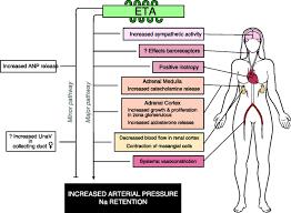 nervous system and homeostasis human anatomy chart