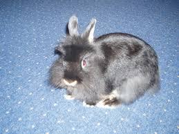 Esszimmertisch Zu Verschenken Kleinanzeigen Hasen Kaninchen Seite 5