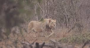 sle resume journalist position in kzn wildlife ezemvelo accommodation tagged trio get taste of freedom news24 linkis com