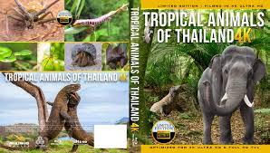 film blu thailand tropical animals of thailand 4k