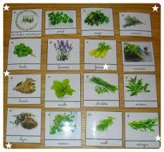 les herbes de cuisine cartes de nomenclature sur les herbes aromatiques croquelavieenrose