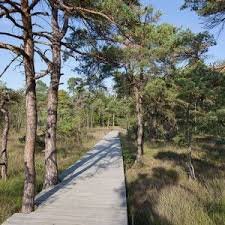 343 best bridge boardwalk images on pinterest landscape design