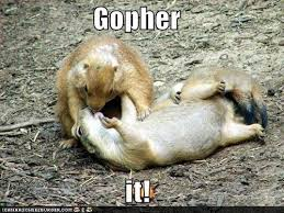 Gopher Meme - image 75144 gopher it know your meme