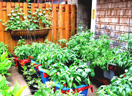 small vegetable garden plans raised most nutritious vegetables in