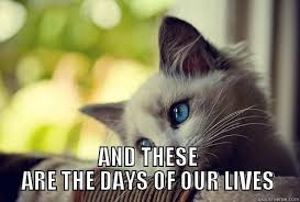 Days Of Our Lives Meme - first world problems cat quickmeme