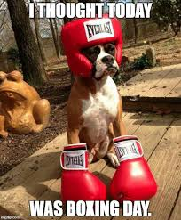 Boxing Memes - this dog tried so hard imgflip