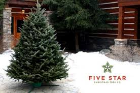christmas tree delivery up to 64 a christmas tree delivered to your door