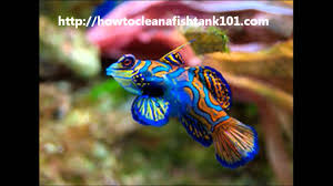 colorful fish for a colorful aquarium full of fish youtube