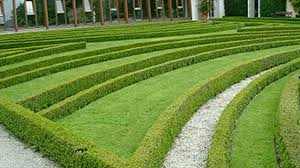 hedging plants budget wholesale nursery correct way to use hedges in landscaping hedges planting tips