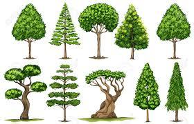 different types of trees different types of trees illustration royalty free cliparts vectors