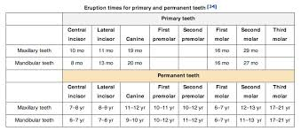 Wheeler S Dental Anatomy Physiology And Occlusion Eruption Times Of Primary And Permanent Teeth Anthropology Net