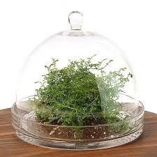 cloche terrarium kit