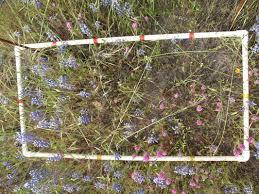 ecology lap 1 mead u0027s fabulous weebly