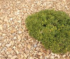 Gravel Price Per Cubic Yard Best 25 Gravel Delivery Ideas On Pinterest Bee Feeder Country