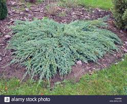 popular ornamental plant stock photos popular ornamental plant